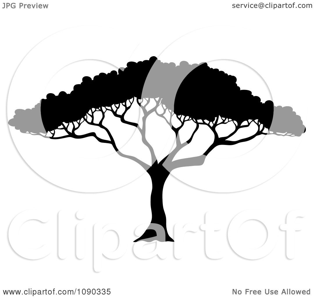 Clipart Silhouetted Acacia Tree With Lush Foliage