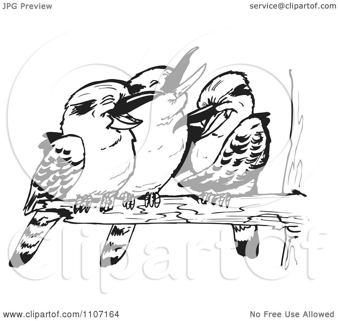Clipart Three Black And White Kookaburra Birds Laughing On