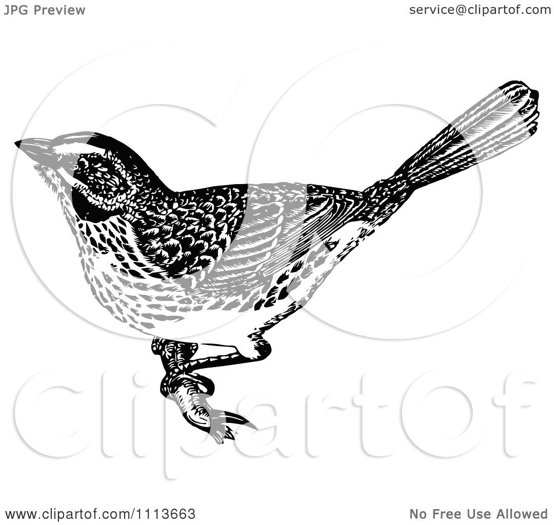 Clipart Vintage Black And White Sparrow