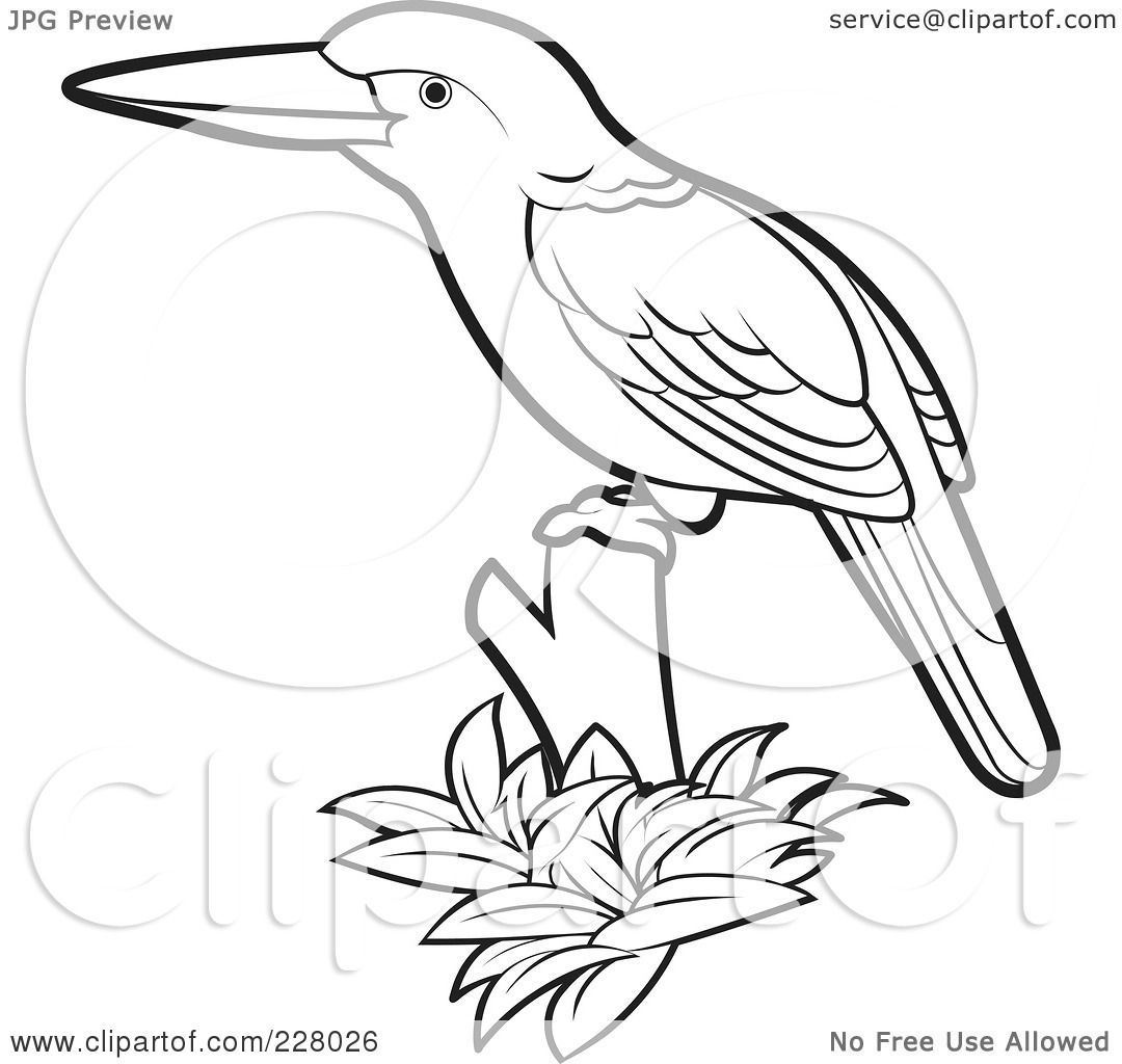 Clipart Of Bird
