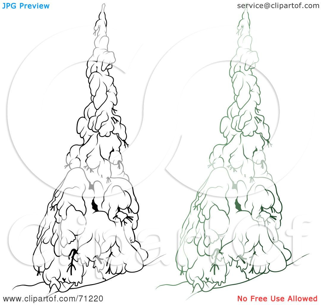 Royalty Free Rf Clipart Illustration Of An Evergreen
