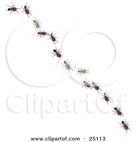 worker ants