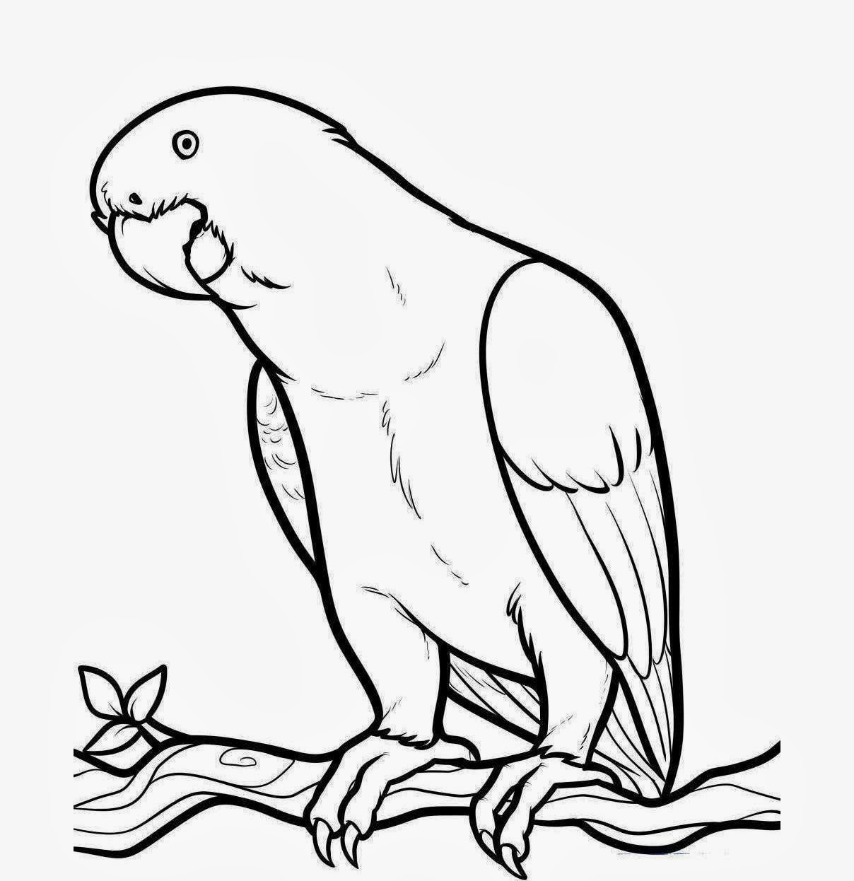 Cute Parrot Drawing Clipart Panda
