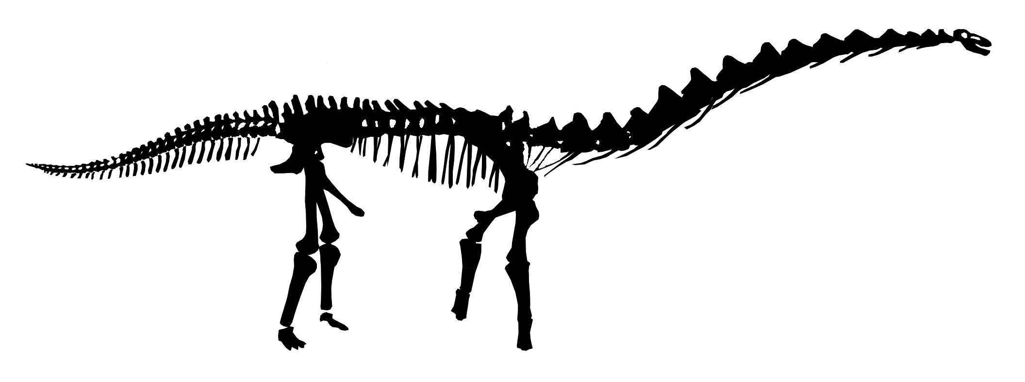 Dinosaur Skeleton Outline Clipart Panda
