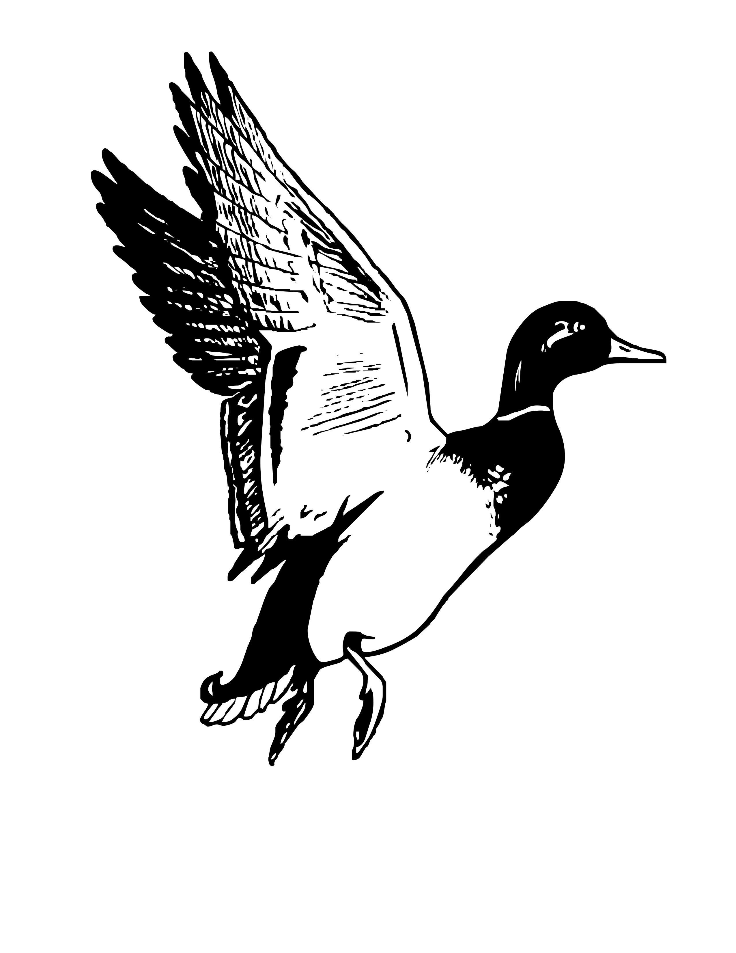 Mallard Duck Clipart Black And White
