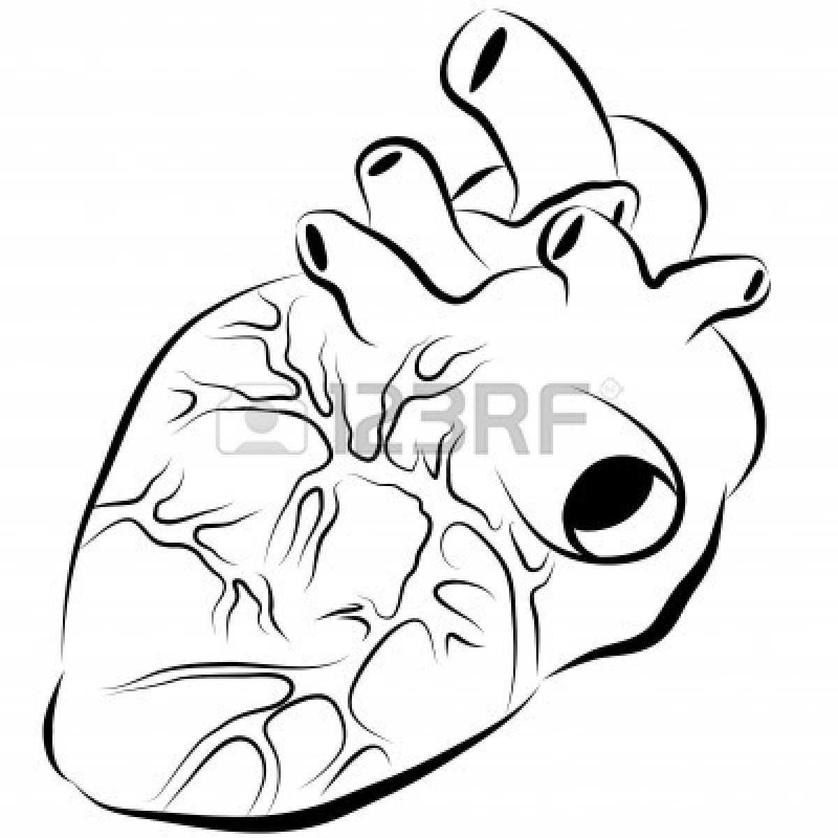 Human Heart Clipart Black And White Clipart Panda