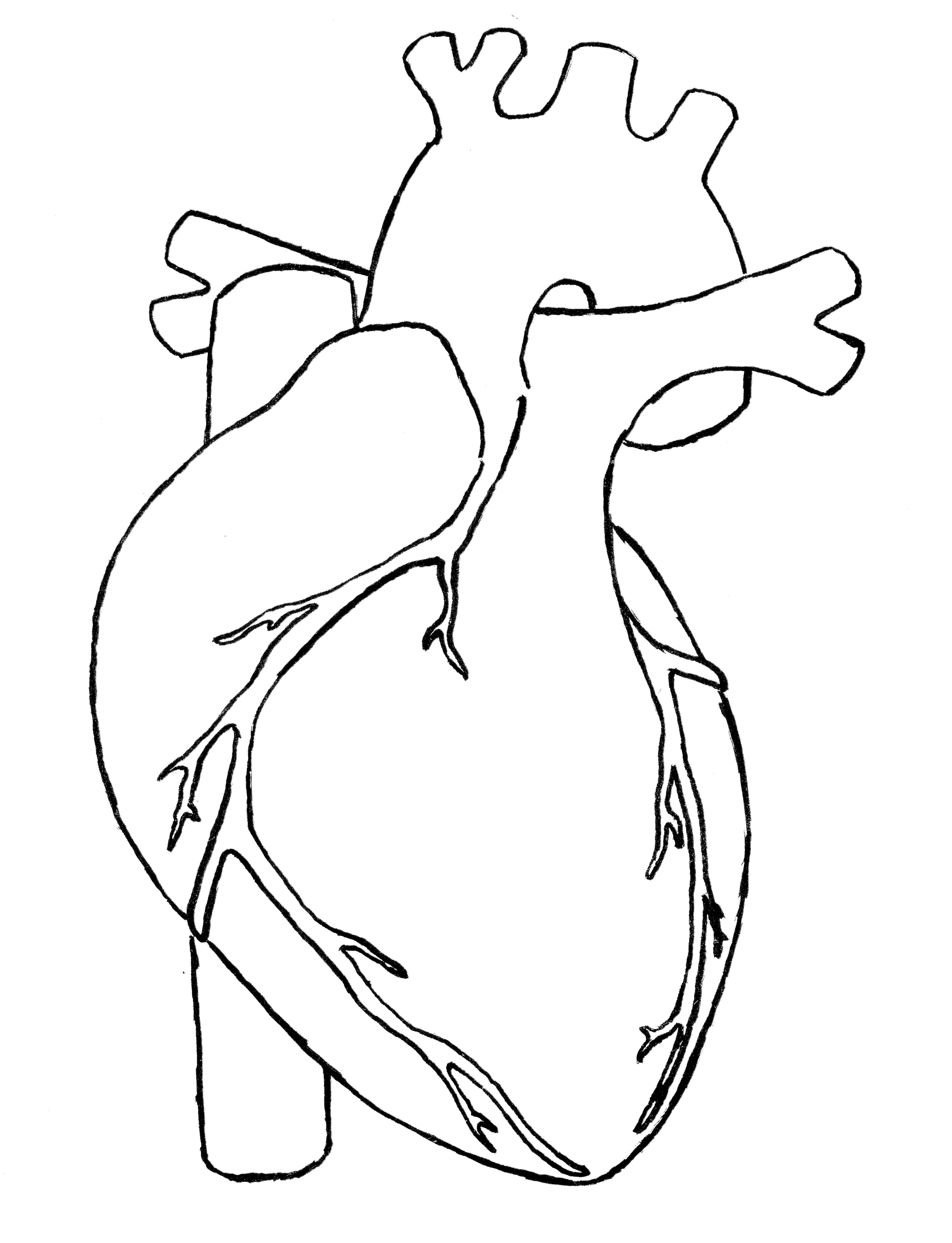 Real Heart Drawing Clipart Panda