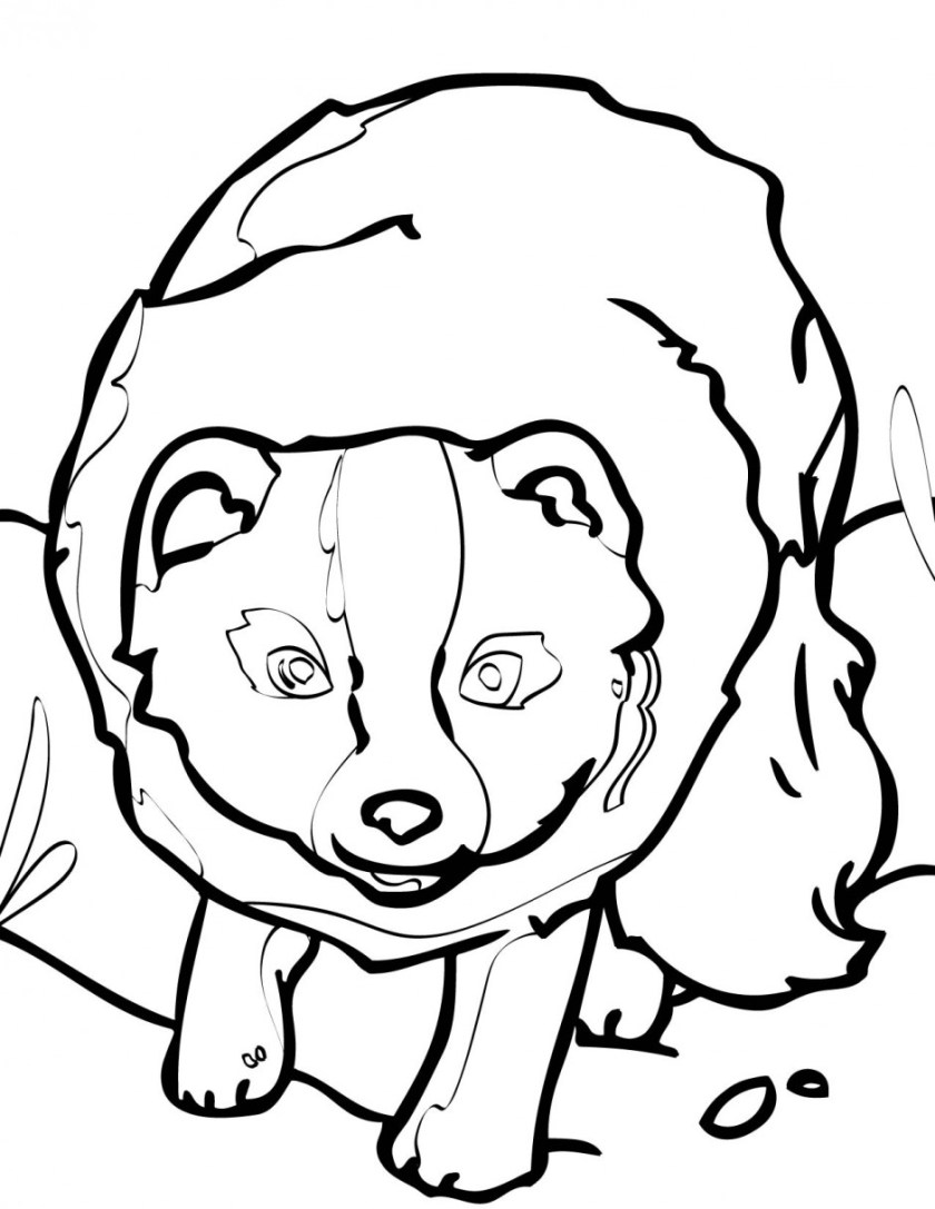 arctic fox coloring page  clipart panda  free clipart images