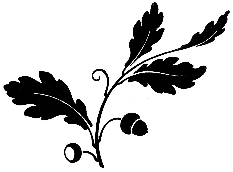 Oak Leaf Clipart Black And White Clipart Panda