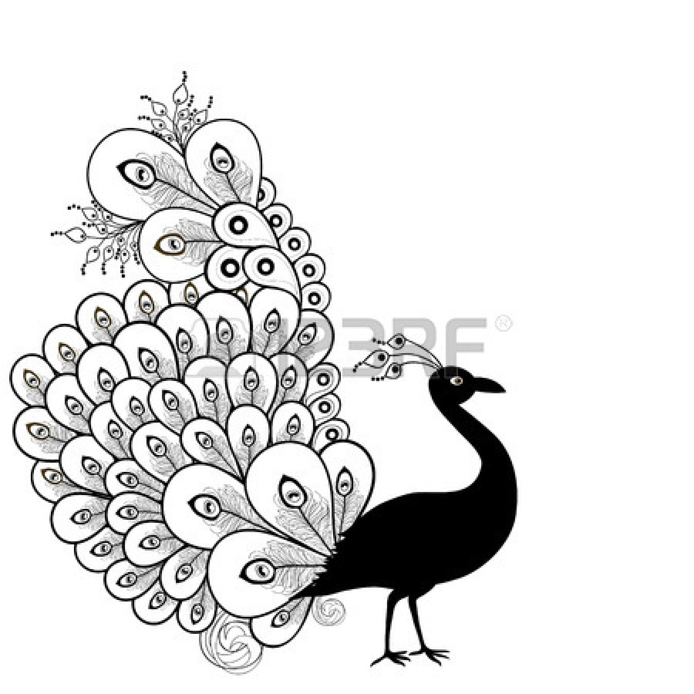 Peacock Black And White Clipart Panda