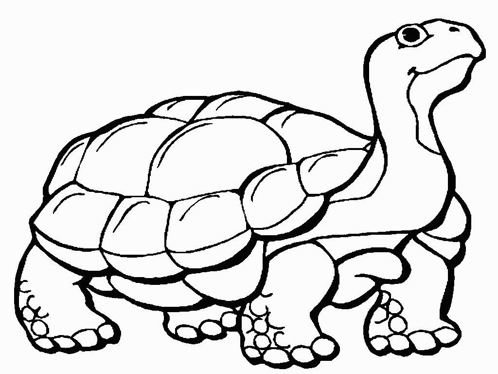 Tortoise 20clipart Clipart Panda