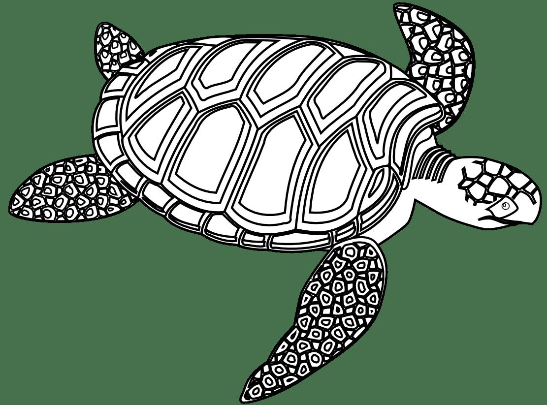 Sea Turtle Clipart Black And White Clipart Panda