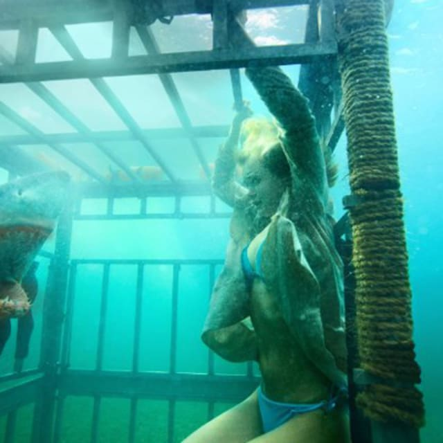 Shark Night 3D Giveaway Win An Xbox 360 250GB With