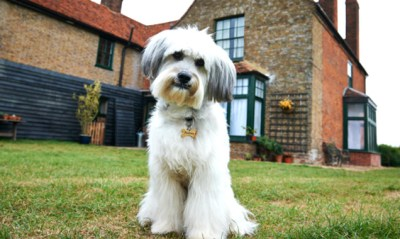 Britain's Got Talent vehicle Pudsey the Dog: The Movie was nothing more than a shameless cash-in