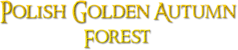 Polish Golden Autumn                    Forest