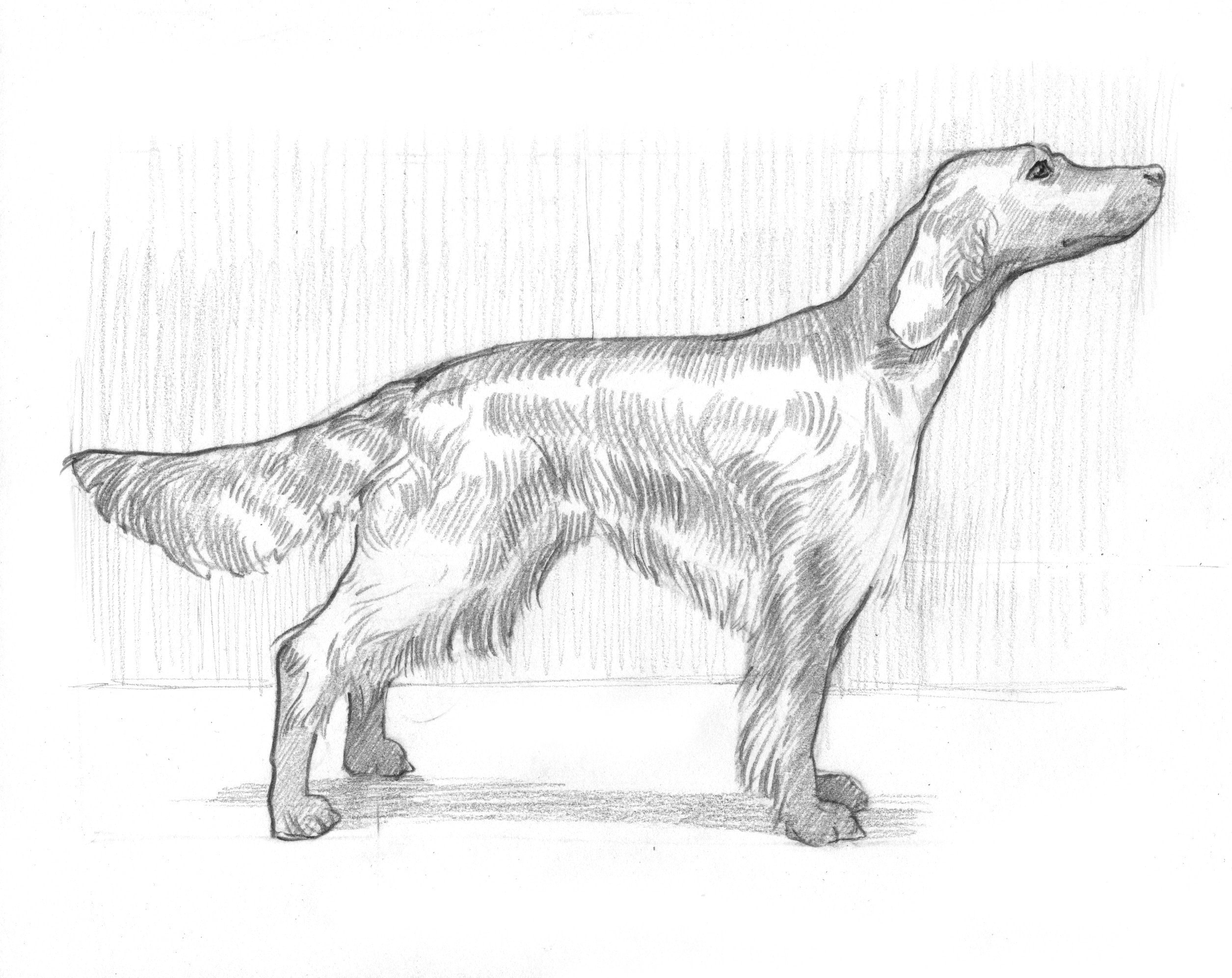 Draw A Dog In 15 Minutes How To Draw An Animal Drawing