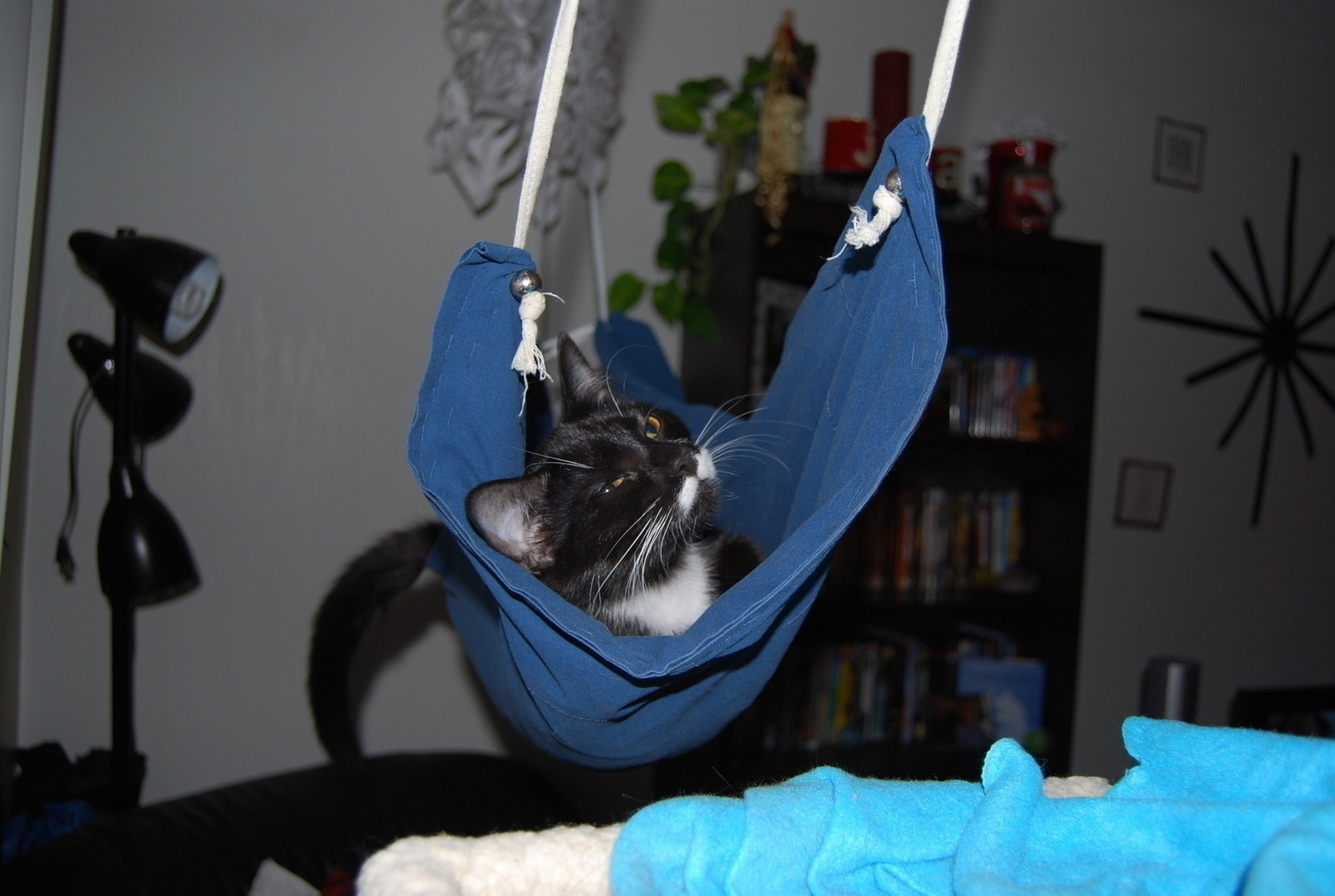 Cat Hammock How To Make A Pet Bed Needlework On Cut