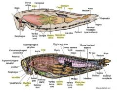 Shsu Zoology Lab Final Flashcards
