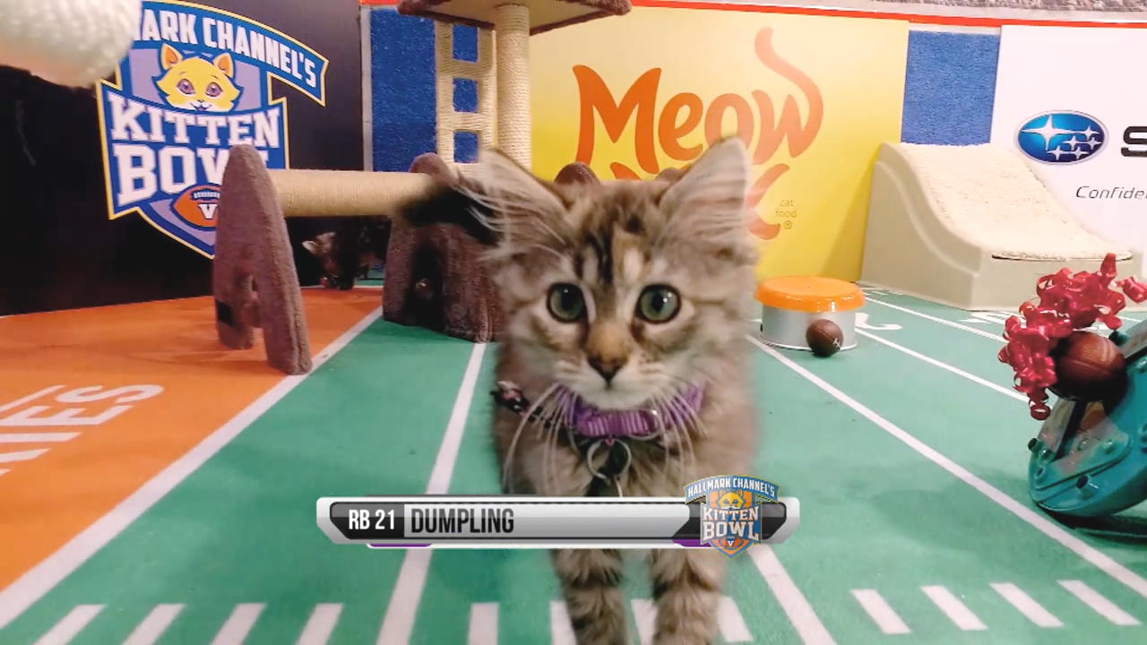 Cat Lete Of The Week Dumpling Kitten Bowl V Hallmark