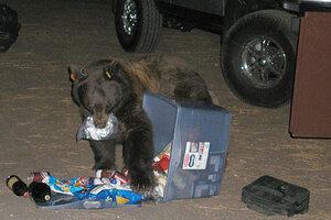 Bears stealing fewer picnic baskets at Yosemite - CSMonitor.com