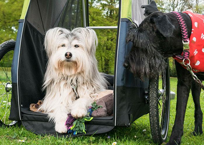CROOZER - Jokke - Dog XL  mit Welpenschutz - Hundeanhänger 2020 2