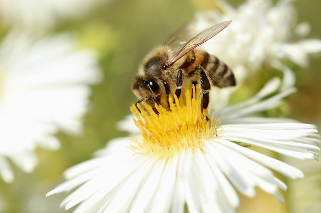 california pollinator project