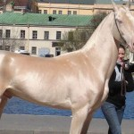 These 10 Rare And Beautiful Horses Are Like Nothing You Ve Ever Seen Littlethings Com