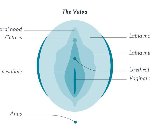 Vaginal Stimulation