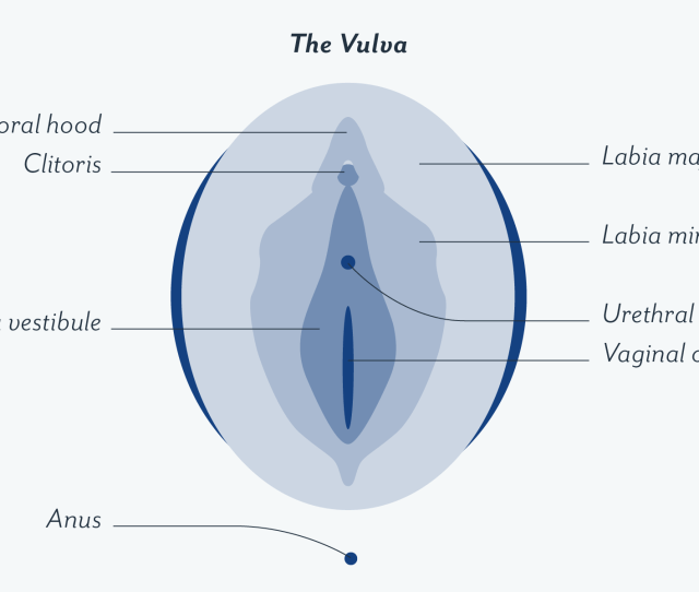 Anatomy Of The Vagina