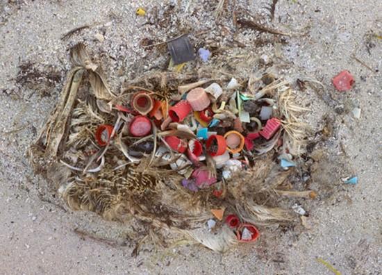 marine-debris-beach-midway-credit-chris-jordan_472.jpg