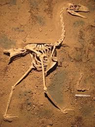 fossilbird2.jpg