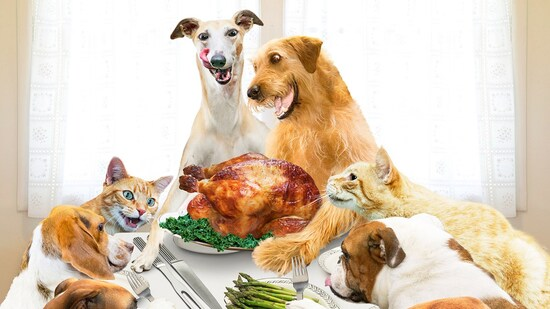 748350485_thanksgiving-dog-cat-zoom.jpg