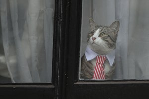 Botschaftskater James hat sich für den Besuch herausgeputzt.