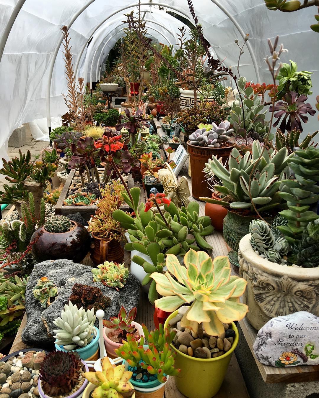 21+ Succulent Garden Designs | Garden Designs | Design ... on Small Backyard Garden Design id=16875