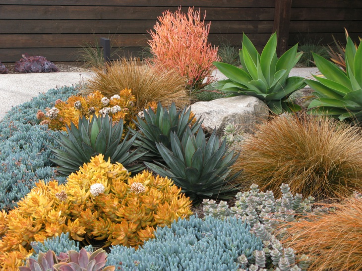 18+ Succulent Garden Designs, Ideas