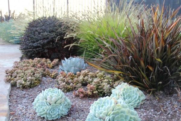 modern succulent garden ideas 18+ Succulent Garden Designs, Ideas   Design Trends