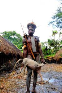 Mempersiapkan babi (dok. Satria Gunadharma/ACI)