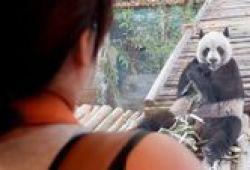 Bertemu Chuang Chuang Dan Lin Hui, Panda Menggemaskan Di Thailand