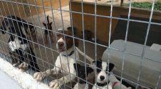 Una imagen de algunos de los perros que residen en las instalaciones de Los Perales.