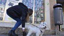 El gesto cívico de una vecina de Sevilla recogiedo el excremento de su perro.