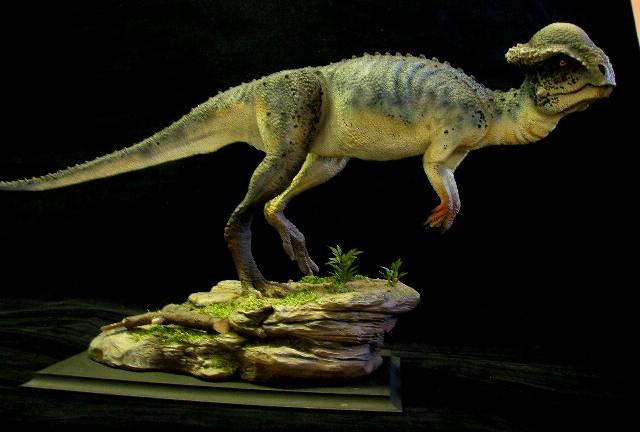 Stegoceras Pictures Amp Facts The Dinosaur Database