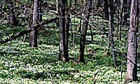 Photo without earthworms: a lush forest.