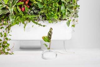 41/ 105 cm, la collezione di appendini per piante da interno può adattarsi a una varietà di vasi come vasi di ceramica, vasi di metallo,. Plant Your Mac By Monsieur Plant Dwell