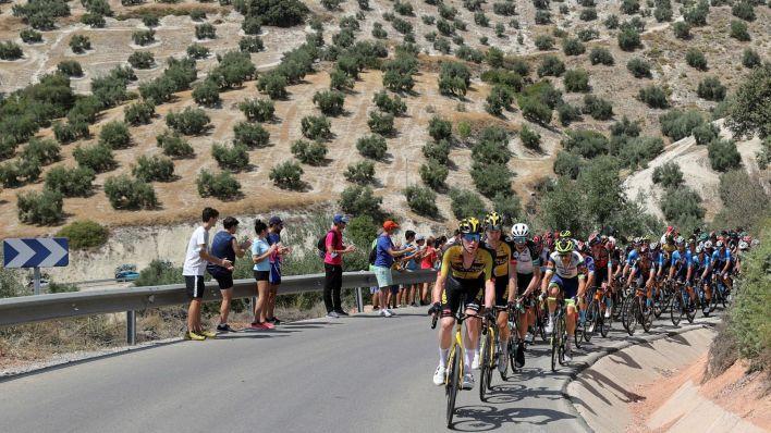 Olivares andaluces en La Vuelta. (EFE)