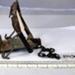 NO. 763581 Rat Trap; Post 1900; 10436/4