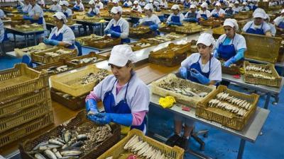 España y Portugal propondrán a la UE recuperar el 5 % biomasa/año de la sardina hasta 2022