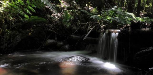 Bosque de El Cedro, Parque Nacional de Garajonay