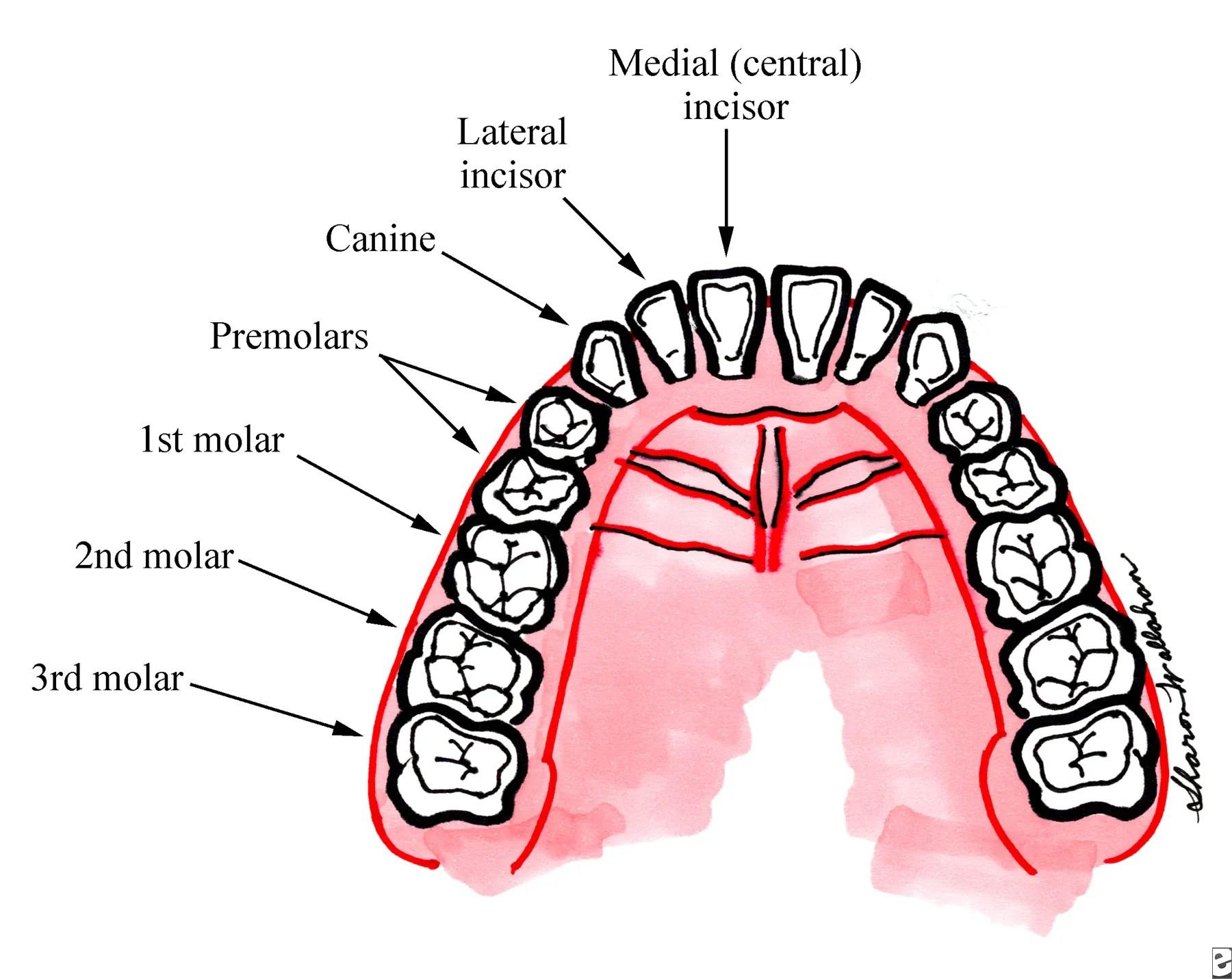 Brokenteeth Broken Tooth Pain Repair Extraction Amp Infection