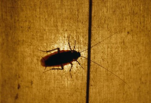 A silhouette of a cockroach on a fabric.