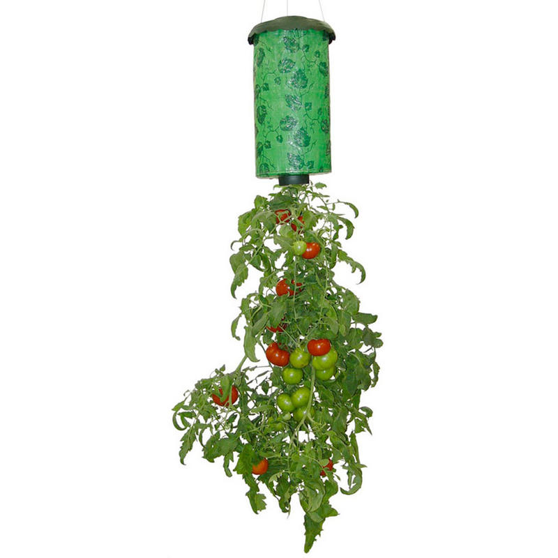 Tomato Plant Grower Down Upside